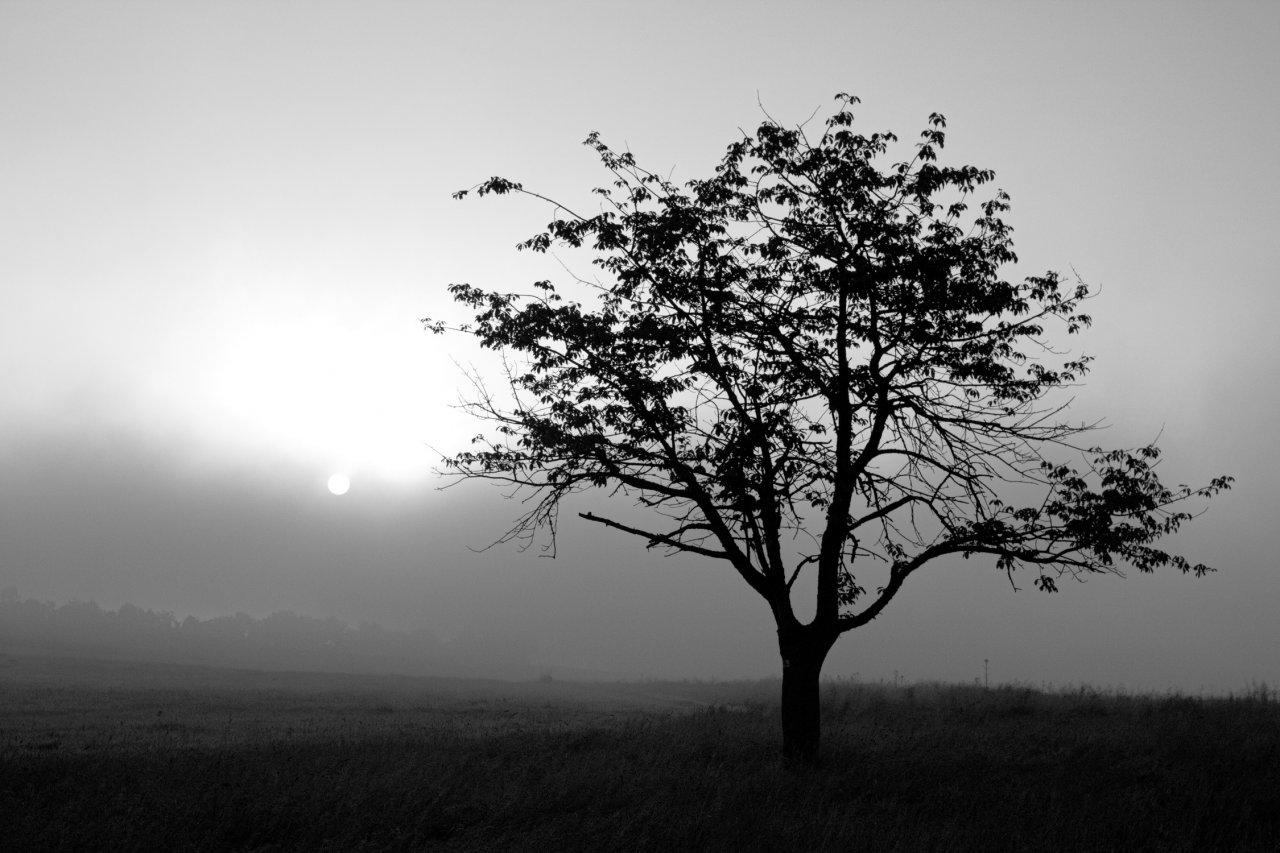 Baum (1 von 1).jpg