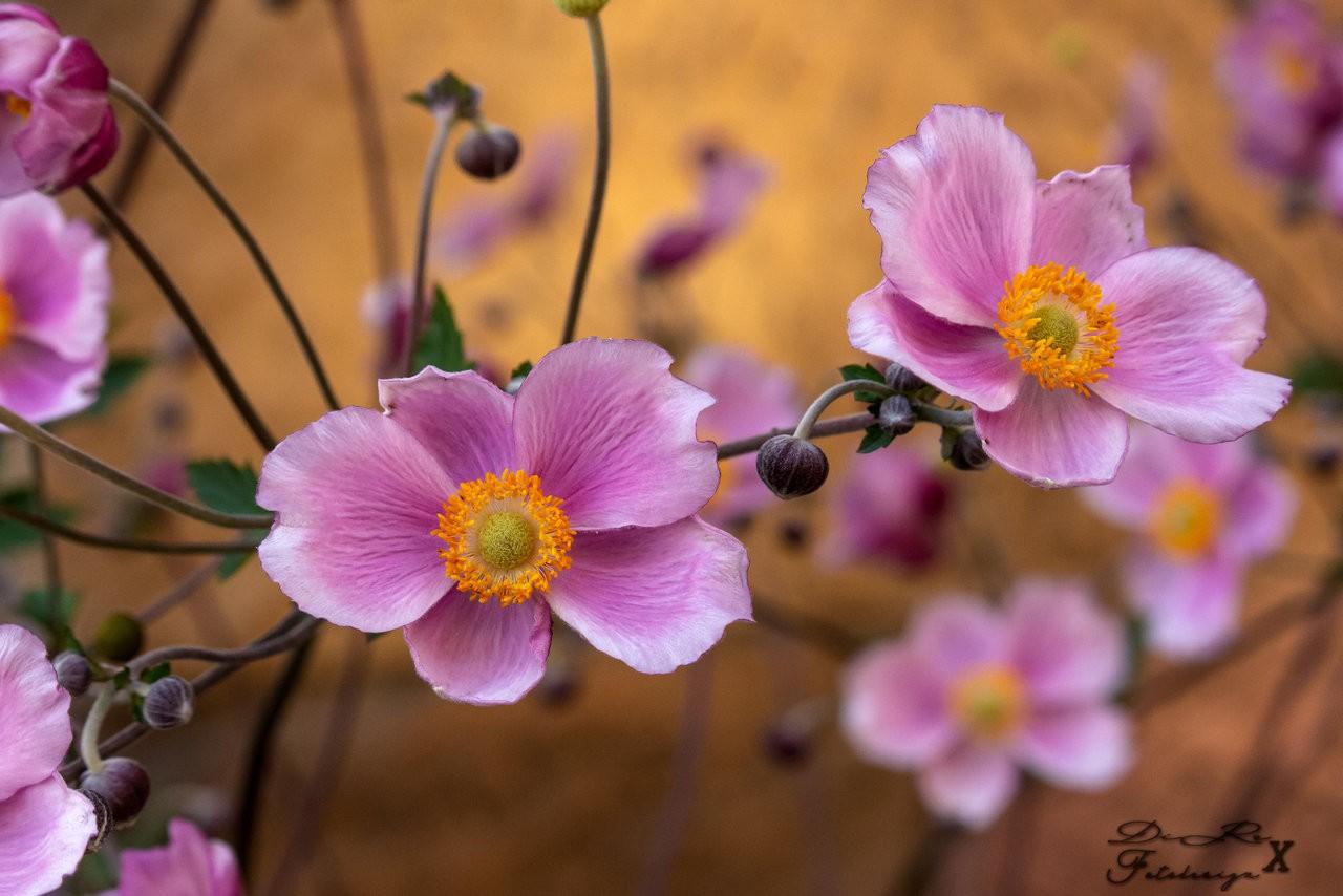 nice flower bokeh_08082019.jpg
