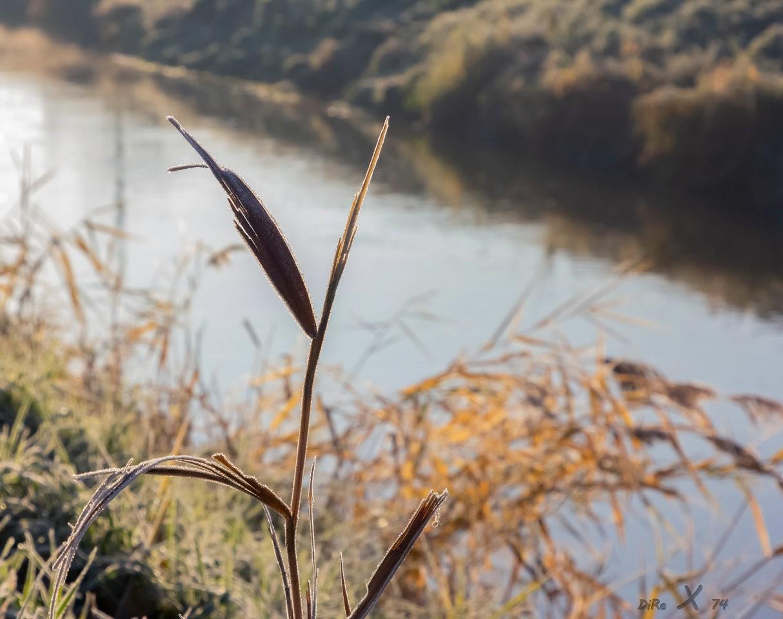 winter grass_06122019-2.jpg
